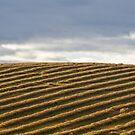 Rows by paul erwin