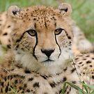 The Cheetah by Vickie Burt
