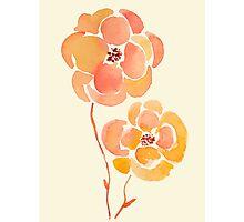 Peach Blossom Flowers Photographic Print