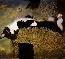 Feline Fantasia by Lynn Starner
