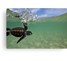 Baby surfing ninja turtle Canvas Print