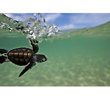 Baby surfing ninja turtle Photographic Print