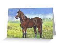 Australian Stockhorse  Greeting Card