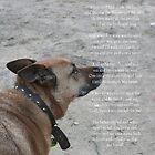 God's Dog Poem by Diana-Lee Saville