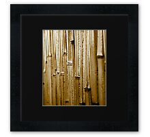 The Bamboo Wall Framed Print