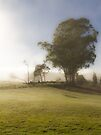 A Misty Morning in Westerway by Elaine Teague