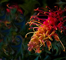 Australian grevillea remix by indiafrank