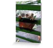 frog in the rain or leaky bum Greeting Card