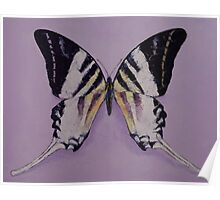 Giant Swordtail Butterfly Poster