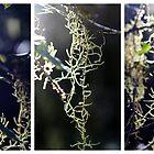 Lichen - Triptych by Kitsmumma