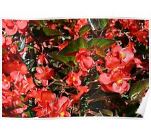 Pattern with red flowers and leaves. Poster