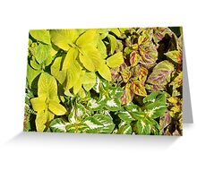 Pattern with colorful yellow green leaves. Greeting Card