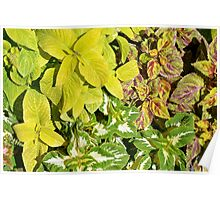 Pattern with colorful yellow green leaves. Poster