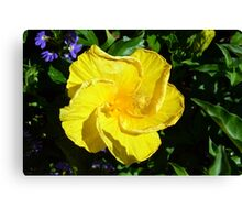Yellow delicate flower on green leaves background Canvas Print