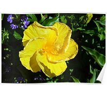 Yellow delicate flower on green leaves background Poster