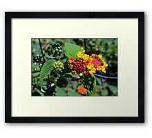 Natural background with colorful flowers and green leaves. Framed Print