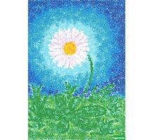 1310 - Bellis Flower Photographic Print