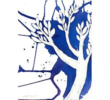 Blue Tree Ink Drawing Photographic Print