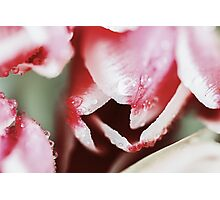 Flowers Bouquet Of Spring Wet Tulips On Table Photographic Print