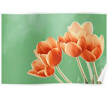 Red And Orange Tulips Flowers Bouquet Poster