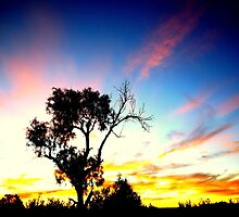 Tree in Australian outback sunset by NSWCamper