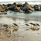 Sunset Sandpipers by debidabble