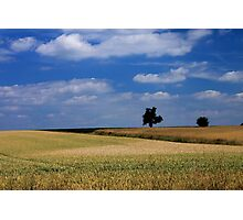 Wheat Field - JUSTART ©  Photographic Print