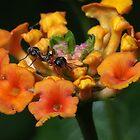Ant on Plant by Ostar-Digital
