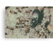 Colony Of Ants Dismember And Eating Beetle Closeup Canvas Print