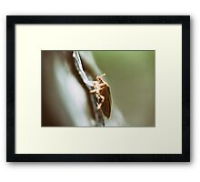 Shield Bug On A Tree Macro Framed Print