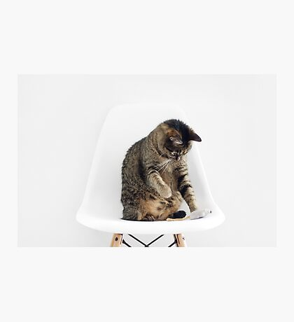 Cute Cat Playing Photographic Print
