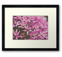Allium Flowers Close Up Framed Print