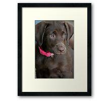 Chocolate Saddie Framed Print