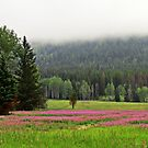 Fireweed carpet by Olga