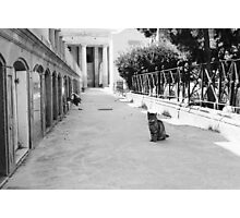 Cat in Poblenou Cemetery Photographic Print