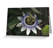Delicate and Beautiful Passiflora Flower Greeting Card