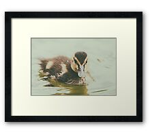 Baby Duck Bird Swimming On Water Framed Print