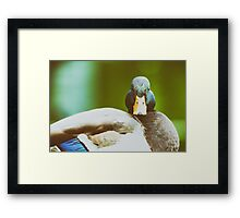 Wild Duck Portrait Close Up Framed Print