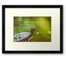 Pond Turtle Heating In The Sun On Rock In Lake Water Framed Print