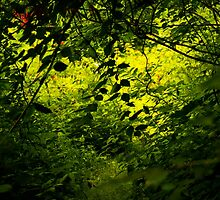 Through the Woods by Jason Lee Jodoin