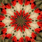 Papaver Rotation by ScaleDesigns