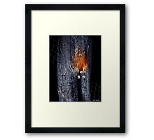 The Stump Of Knowledge Framed Print