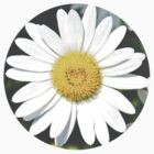 Daisy Heart by kabrown