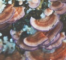 Red and Purple Mushrooms Sticker