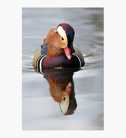 Mandarin Reflection Photographic Print