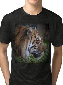 Siberian Tiger Tri-blend T-Shirt