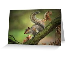 Tails Up! Greeting Card