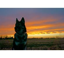 Dog with Burning Sky Photographic Print