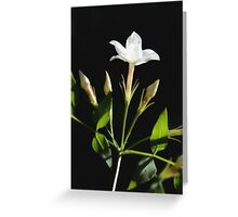 Close Up Of Jasminum Officinale Greeting Card