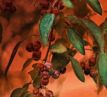 Red Berries on Tree at Sunset In Fall Sticker